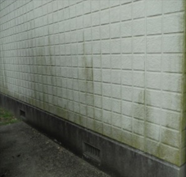こけのひどい外壁